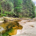Górski potok z lasem w tle.