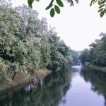 Widok na rzekę z drzewami na brzegach.